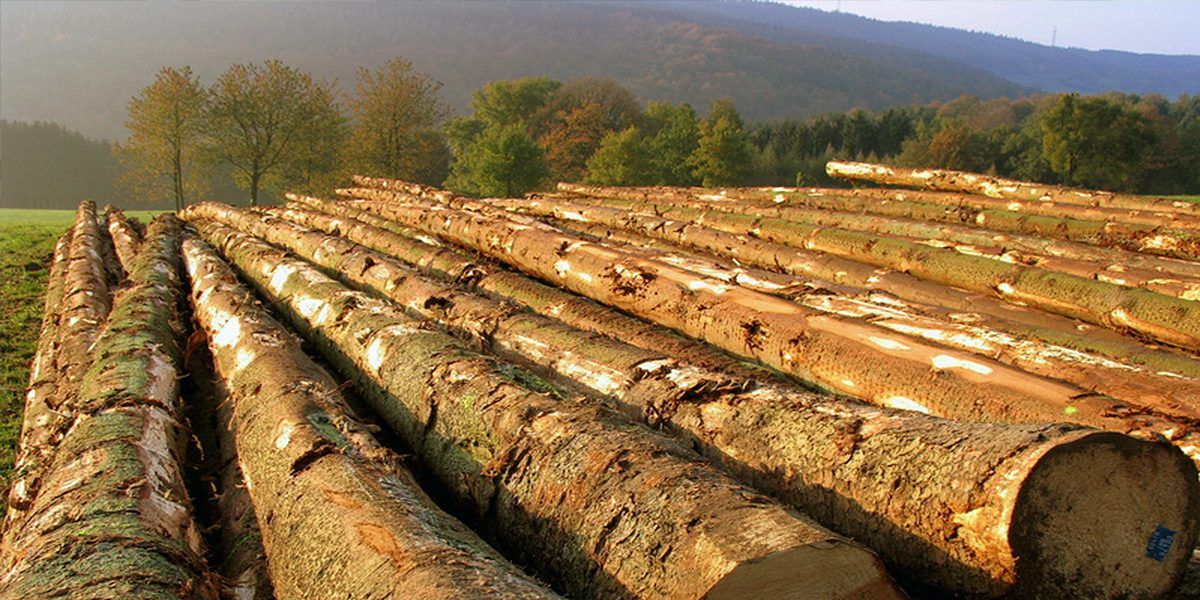 All Of Our Timber Can Be Traced Back To The Forest It Grew In  - EE Olley & Sons Ltd